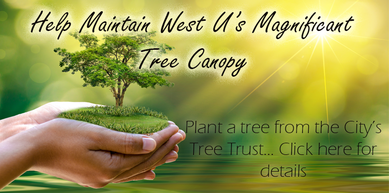Plant a Tree! Applications are now being taken for trees from the West U Tree Trust